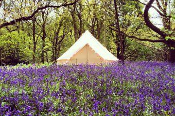 Bell Tent in amongst field of purple flowers